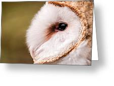 Barn Owl Profile Greeting Card