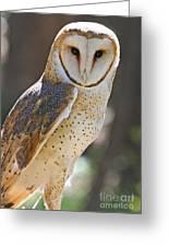 Barn Owl Raptor  Greeting Card