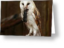 Barn Owl With Catch Of The Day Greeting Card