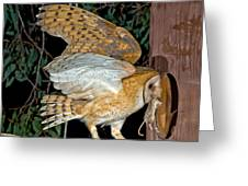 Barn Owl With Prey Greeting Card