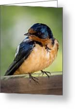 Barn Swallow Greeting Card by Ernie Echols