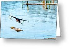 Barn Swallow In Flight Greeting Card