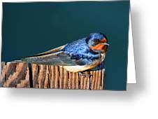 Barn Swallow Perching Greeting Card