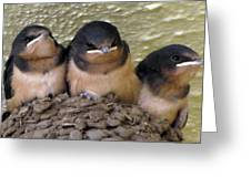 Barn Swallows 1 Greeting Card