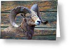 Barn Wood Bighorn Greeting Card