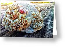 Barnacle Shell Greeting Card