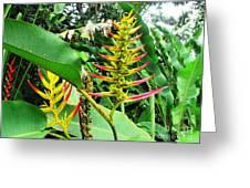Barnilies Flower Greeting Card