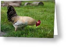 Barnyard Rooster 2 Greeting Card