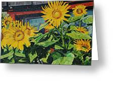 Barnyard Sunflowers Greeting Card