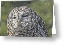 Barred Hoot Owl Photo Art Greeting Card