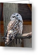 Barred Owl 264 Greeting Card