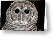 Barred Owl 3 Greeting Card