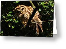 Barred Owl  Hello Greeting Card