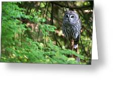 Barred Owl In Forest Greeting Card