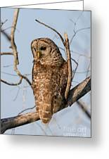 Barred Owl Okefenokee Swamp Georgia Greeting Card