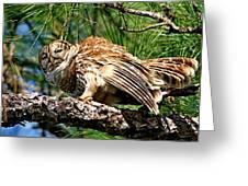 Barred Owl On Limb Greeting Card