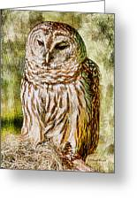 Barred Owl On Moss Greeting Card