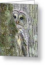 Barred Owl Peek A Boo Greeting Card