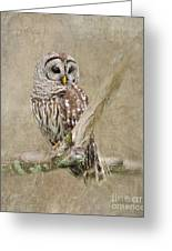 Barred Owl Portrait Greeting Card