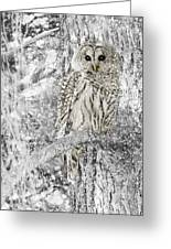 Barred Owl Snowy Day In The Forest Greeting Card