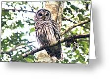 Barred Owl Staring Greeting Card