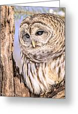 Barred Owl Watch Greeting Card