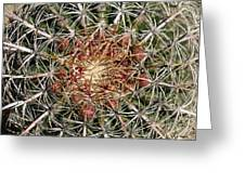 Barrel Cactus Greeting Card