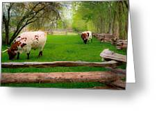 Barrington Farm Bovine Greeting Card