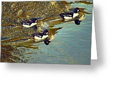 Barrow's Goldeneyes Going For The Gold Greeting Card