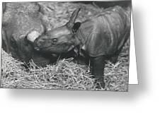 Basel World-record In Rhinoceros Breeding Greeting Card