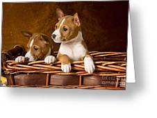 Basenji Puppies Greeting Card by Marvin Blaine