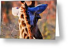 Bashful Giraffe  Greeting Card