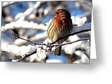 Basking In Winter Light Greeting Card