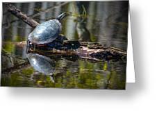 Basking Turtle Greeting Card