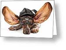 Basset Hound Dog Aviator Greeting Card