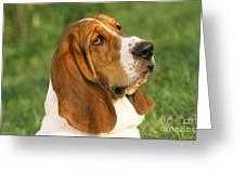 Basset Hound Dog Greeting Card