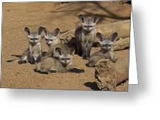 Bat-eared Fox Pups Greeting Card