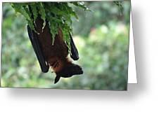 Bat In The Rain Greeting Card