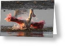 Bath Time - Roseate Spoonbill Greeting Card