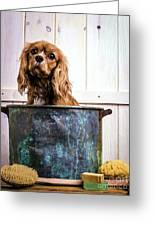 Bath Time - King Charles Spaniel Greeting Card