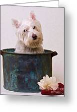 Bath Time Westie Greeting Card