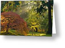 Bathed In Morning Light Greeting Card