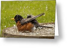 Bathing Robin Greeting Card