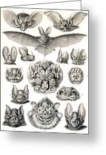 Bats Bats And More Bats Greeting Card