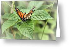 Battered Butterfly Greeting Card