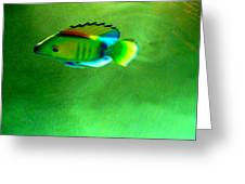Battery Operated Fish Greeting Card