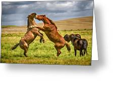 Battling Stallions Greeting Card