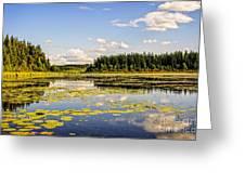 Bay At The Waskesiu Lake With Lily Greeting Card