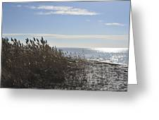 Bay Breeze In Winter Greeting Card