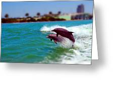 Bay Dolphins Greeting Card